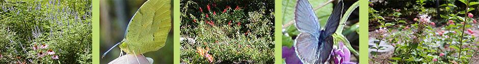 Ann's Butterfly Garden